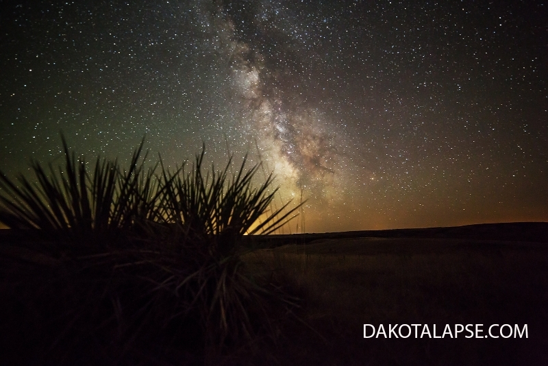 Yucca and Milky Way