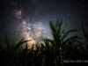 Milky Way over Corn